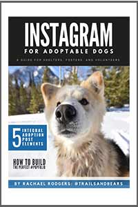 Instagram For Adoptable Dogs